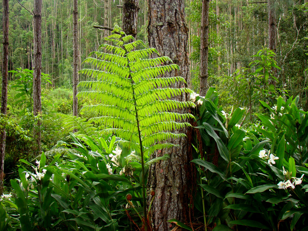 Fotos da Região de Visconde de Mauá - Fauna e Flora - Visconde de Mauá-RJ